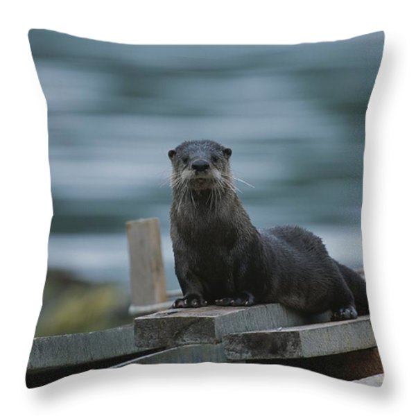 A River Otter Perched On Planks Of Wood Throw Pillow by Joel Sartore