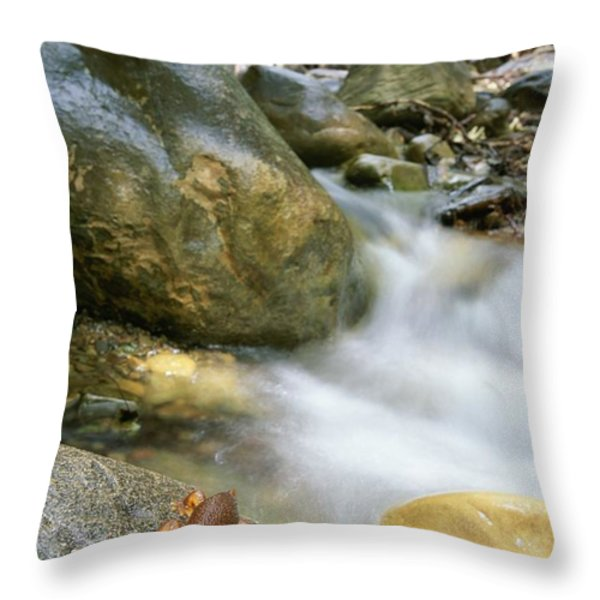 A Rough-skinned Newt Sits On A Rock Throw Pillow by Rich Reid