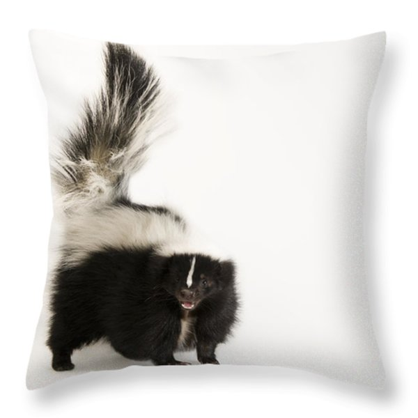 A Striped Skunk, Mephitis Mephitis Throw Pillow by Joel Sartore