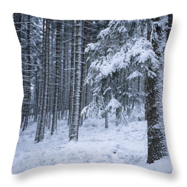 A Winter View Of The Throw Pillow by Taylor S. Kennedy