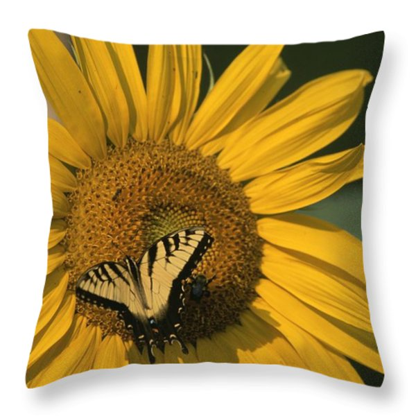 A Yellow Swallowtail Throw Pillow by Taylor S. Kennedy
