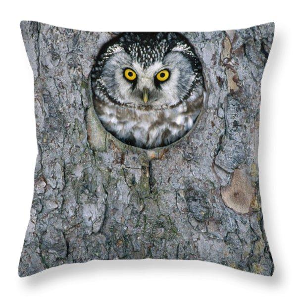 Boreal Owl Aegolius Funereus Peaking Throw Pillow by Konrad Wothe