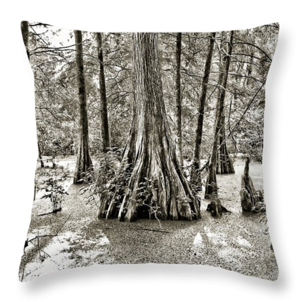 Cypress Evening Throw Pillow by Scott Pellegrin