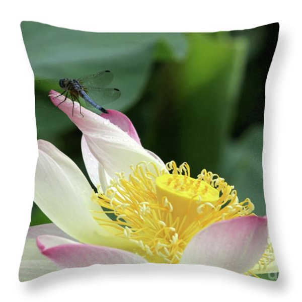 Dragonfly On Lotus Throw Pillow by Sabrina L Ryan