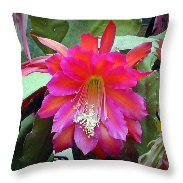 Fuchia Cactus Flower Throw Pillow by Douglas Barnett