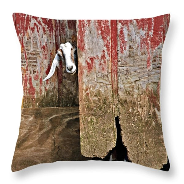 Goat And Old Barn Door Throw Pillow by Susan Leggett
