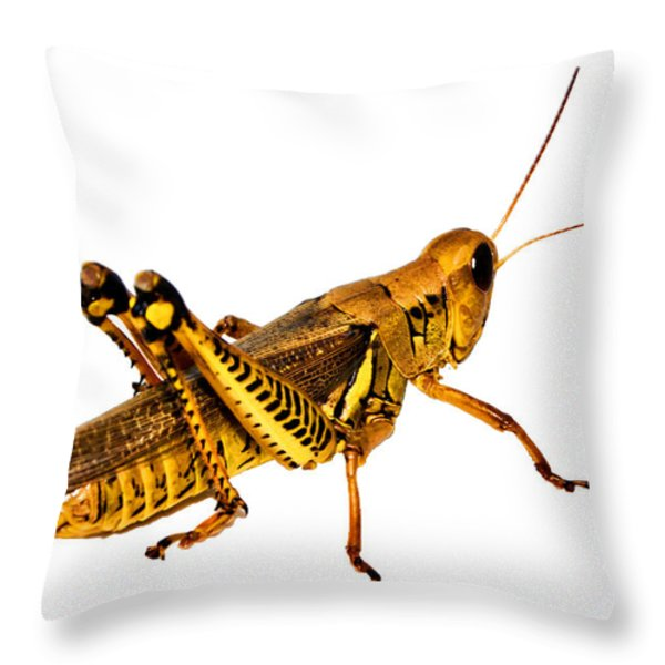 Grasshopper I Throw Pillow by Gary Adkins