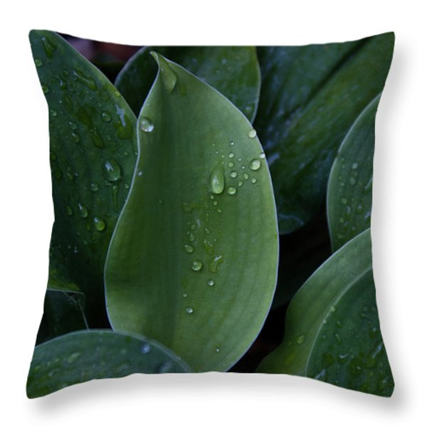 Hausta Dew Drops Throw Pillow by Douglas Barnett