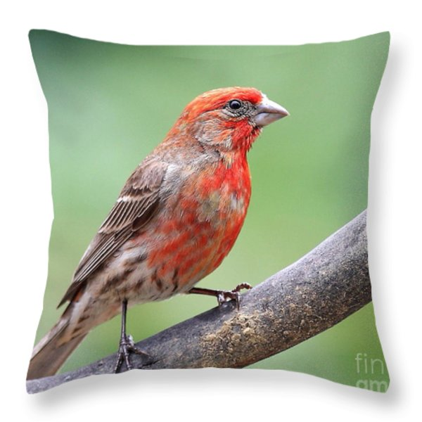 House Finch Throw Pillow by Wingsdomain Art and Photography