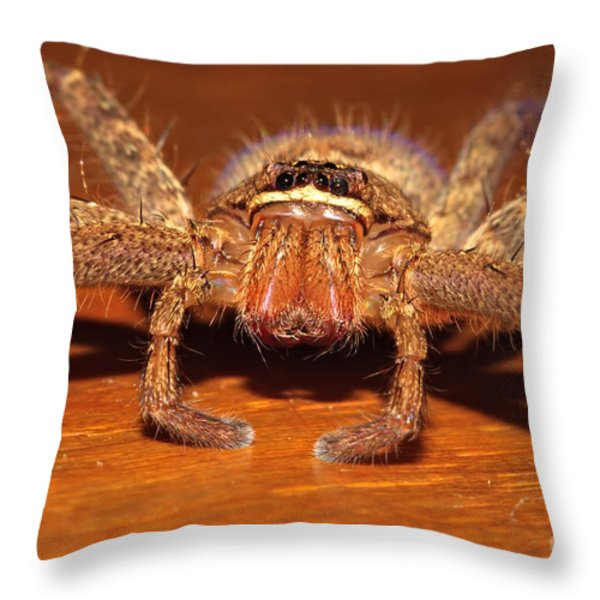 Huntsman Spider Throw Pillow by Joerg Lingnau