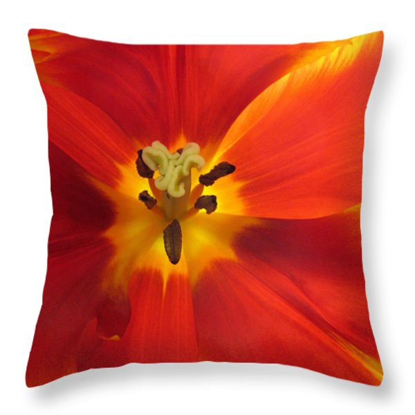 Incandescence Throw Pillow by Jessica Jenney
