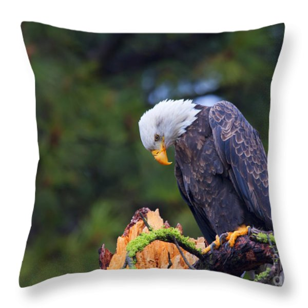 Looking Down On The World Throw Pillow by Mike  Dawson