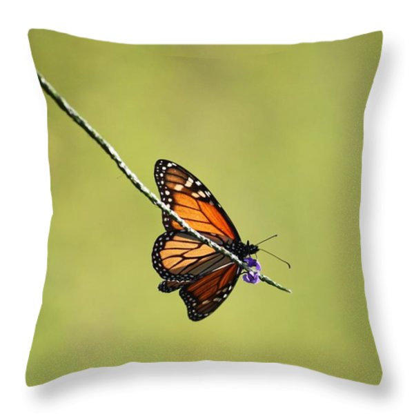 Monarch And Natural Green Canvas Throw Pillow by Carol Groenen