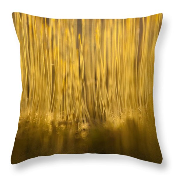 New Terra Firma Generating Throw Pillow by Douglas Barnett