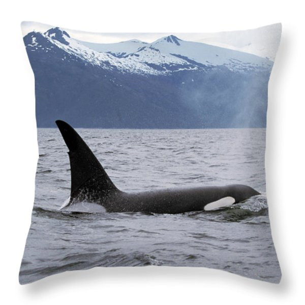 Orca Orcinus Orca Surfacing Throw Pillow by Konrad Wothe
