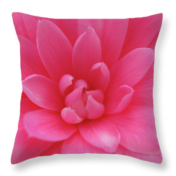 Pink Camellia Throw Pillow by Juergen Roth