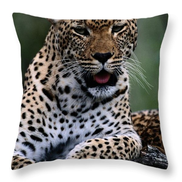 Portrait Of A Male Ten-month-old Throw Pillow by Chris Johns