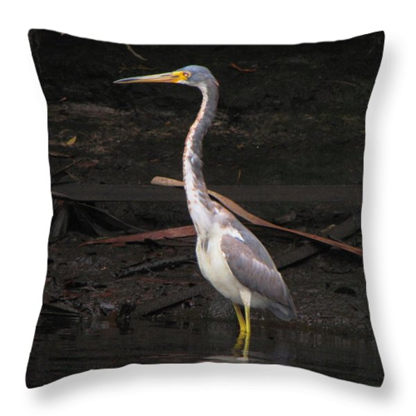 Portrait Of A Tri-colored Heron Throw Pillow by Barbara Bowen
