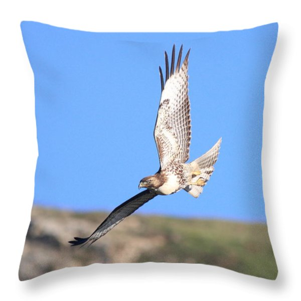 Red Tailed Hawk 20100101-6 Throw Pillow by Wingsdomain Art and Photography