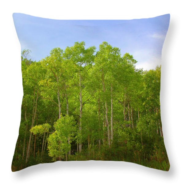 Stand Of Quaking Aspen Trees Throw Pillow by Christine Till