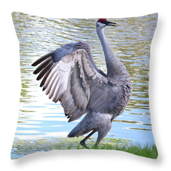 Strutting Sandhill Crane Throw Pillow by Carol Groenen