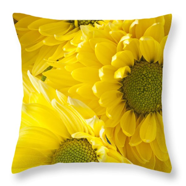 Three Yellow Daisies  Throw Pillow by Garry Gay