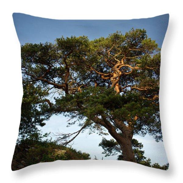 Tree At Maccarthy Mor Castle Throw Pillow by Douglas Barnett