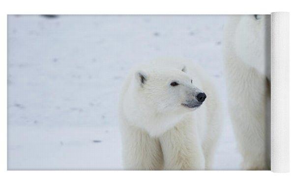 Polar Bears Ursus Maritimus Walking Yoga Mat