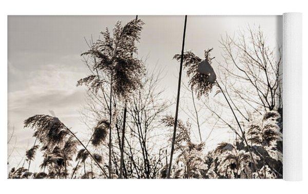 Backlit Winter Reeds Yoga Mat by Elena Elisseeva