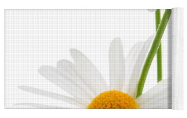 Daisies On White Background Yoga Mat by Elena Elisseeva