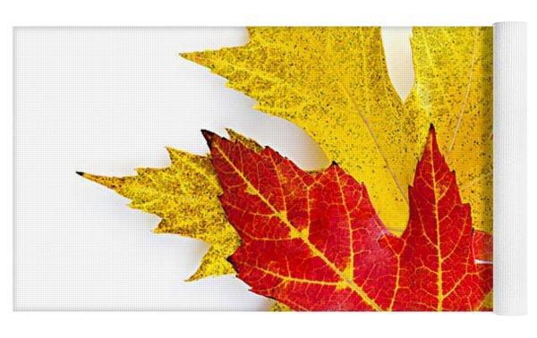 Fall Maple Leaves On White Yoga Mat by Elena Elisseeva