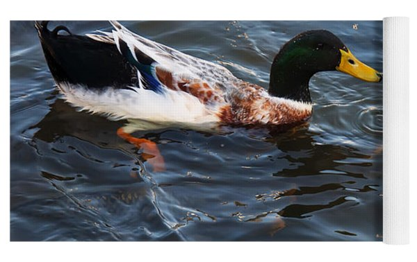 Hibred Ducks Swimming In Beech Fork Lake Yoga Mat