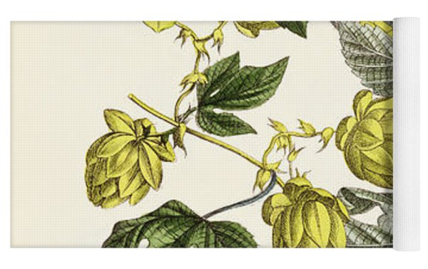 Hop Vine From The Young Landsman Yoga Mat