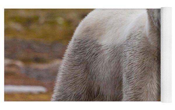 Polar Bear, Spitsbergen Island Yoga Mat