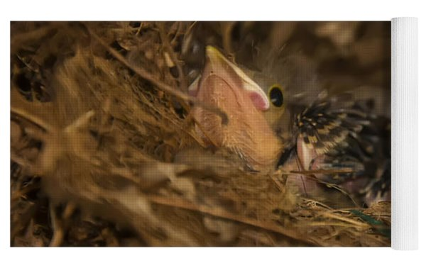 Two Baby Sparrows In A Nest Yoga Mat