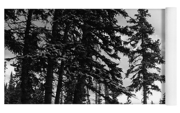Winter Pines Silhouetted Against The Sky Yoga Mat by Cascade Colors