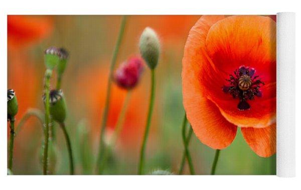 Red Corn Poppy Flowers 07 Yoga Mat by Nailia Schwarz