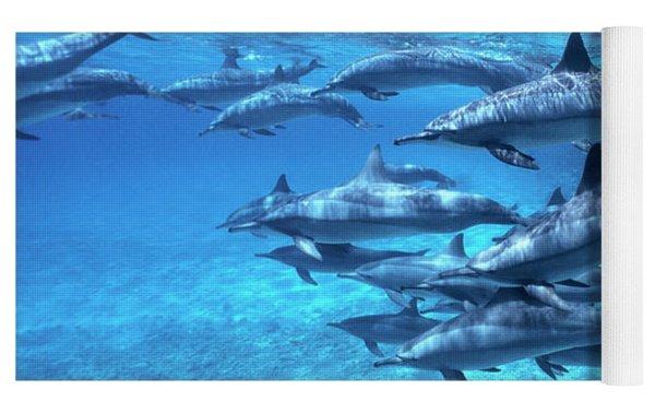 Short-beaked Common Dolphin Delphinus Yoga Mat by Hans Leijnse