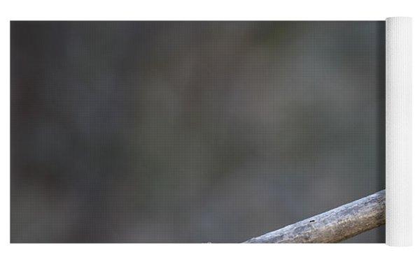 Golden Snub-nosed Monkey Rhinopithecus Yoga Mat by Cyril Ruoso