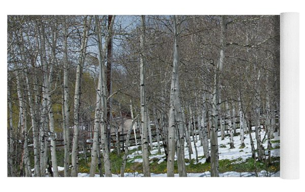 Approaching Spring In The Aspen Forest Yoga Mat by Cascade Colors