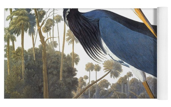 Audubon Heron, 1827 Yoga Mat by John James Audubon