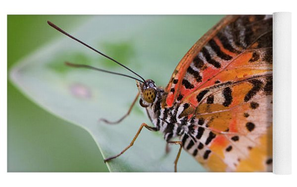 Butterfly On The Edge Of Leaf Yoga Mat by John Wadleigh