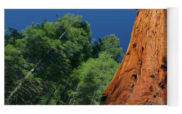Giant Sequoia In Yosemite Yoga Mat by Jeff Foott
