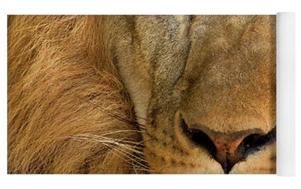 656250006 African Lion Panthera Leo Wildlife Rescue Yoga Mat by Dave Welling