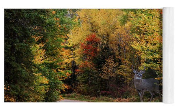 Autumn Buck  Yoga Mat by Patti Deters