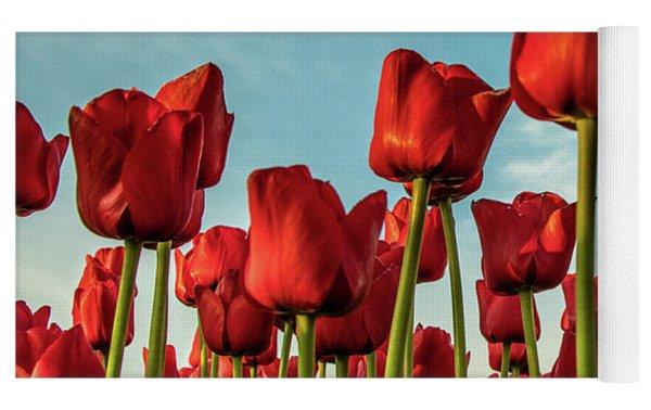 Dutch Red Tulip Field. Yoga Mat by Anjo Ten Kate