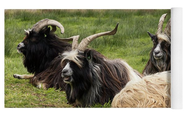 Goats  Yoga Mat by Anjo Ten Kate