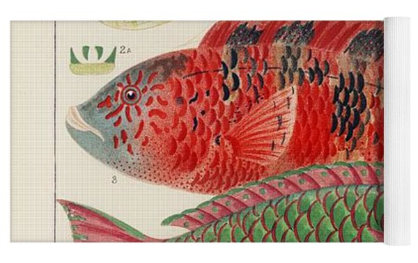 Great Barrier Reef Fishes From The Great Barrier Reef Of Australia  1893 By William Saville-kent  1 Yoga Mat by William Saville-Kent