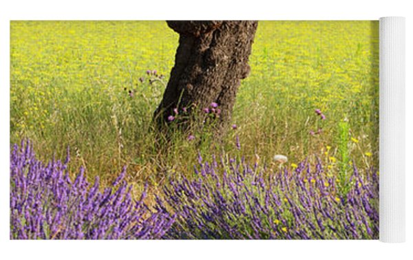 Lone Tree In Lavender And Mustard Fields Yoga Mat by Brian Jannsen