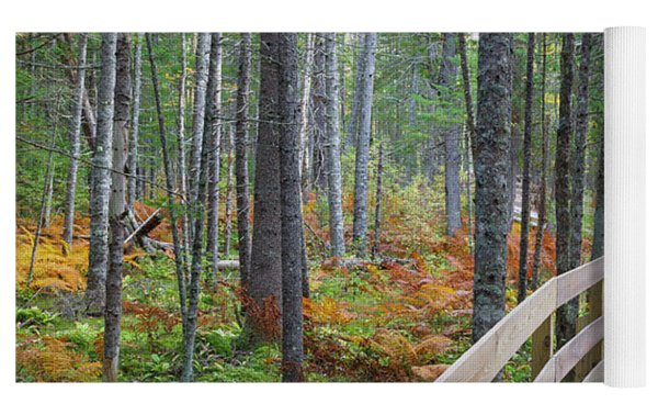 Mud Pond Trail - Pondicherry Wildlife Refuge, New Hampshire Yoga Mat by Erin Paul Donovan